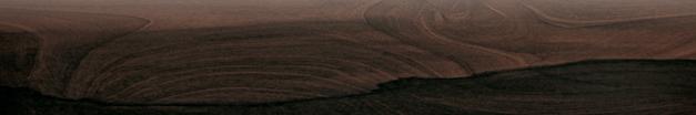 Papaya Bullnose